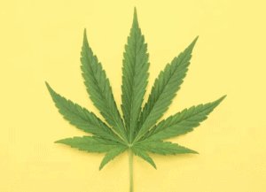 cannabis and property